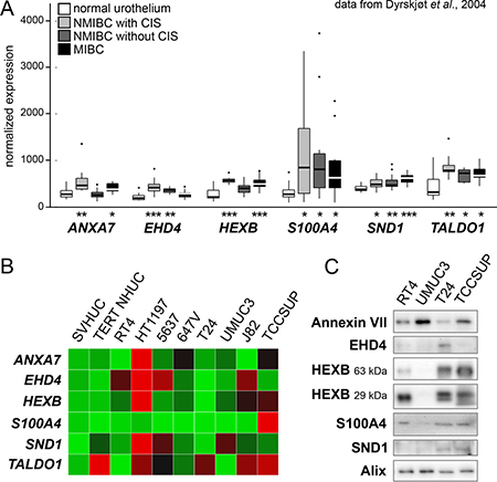 Examination of candidate EV proteins in patient and cell line arrays.