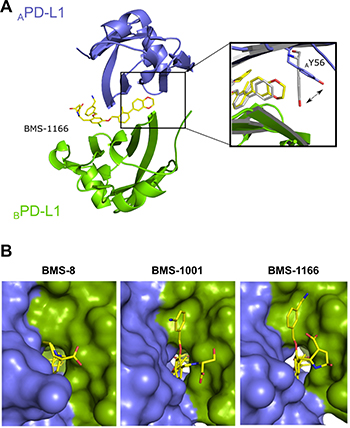 BMS-1166 induces binding cleft opening.