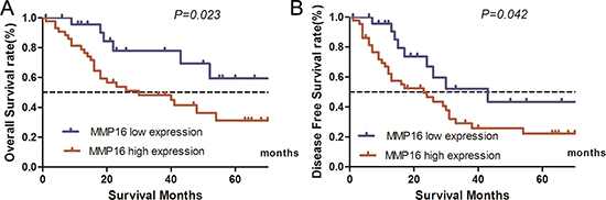 Influence of MMP16 expression patterns on overall survival and disease free survival by Kaplan-Meier analyses in the validation cohort.