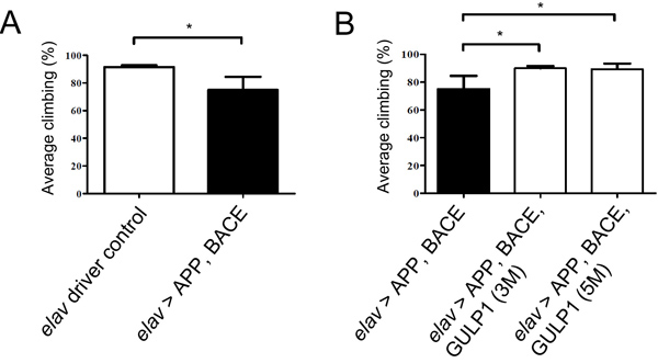 GULP1 ameliorates APP and BACE-induced locomotor dysfunction in a