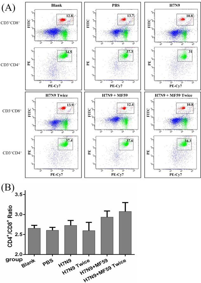 The spenocyte subpopulations of CD3