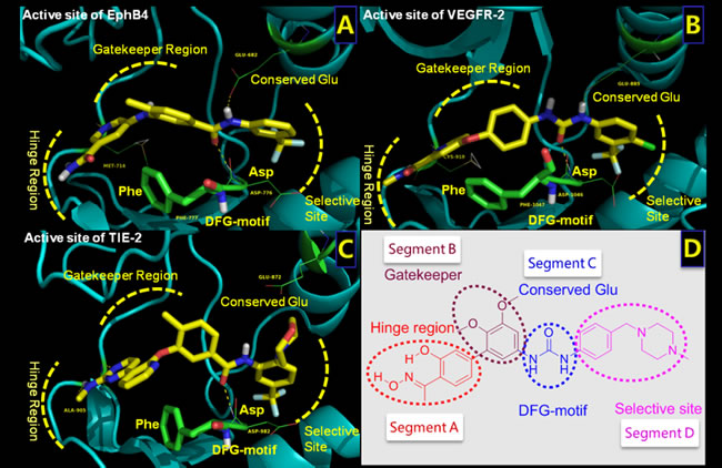 Structures of the active sites of three RTKs bound with co-crystalized inhibitors.