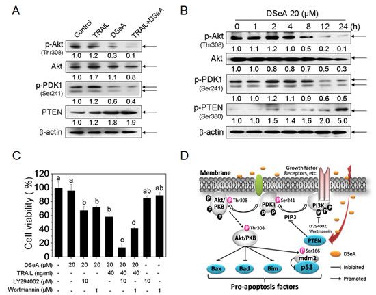 Critical Roles of PI3K/Akt Signaling pathway in A375 cells growth inhibition induced by co-treatment.