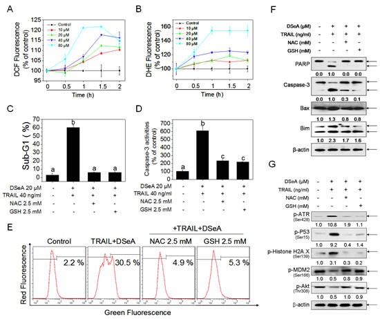 Antioxidants protect A375 cells from co-treatment-induced apoptosis by blocking Akt and MDM2 dephosphorylation, DNA damage-mediated p53 activation and mitochondrial dysfunction.