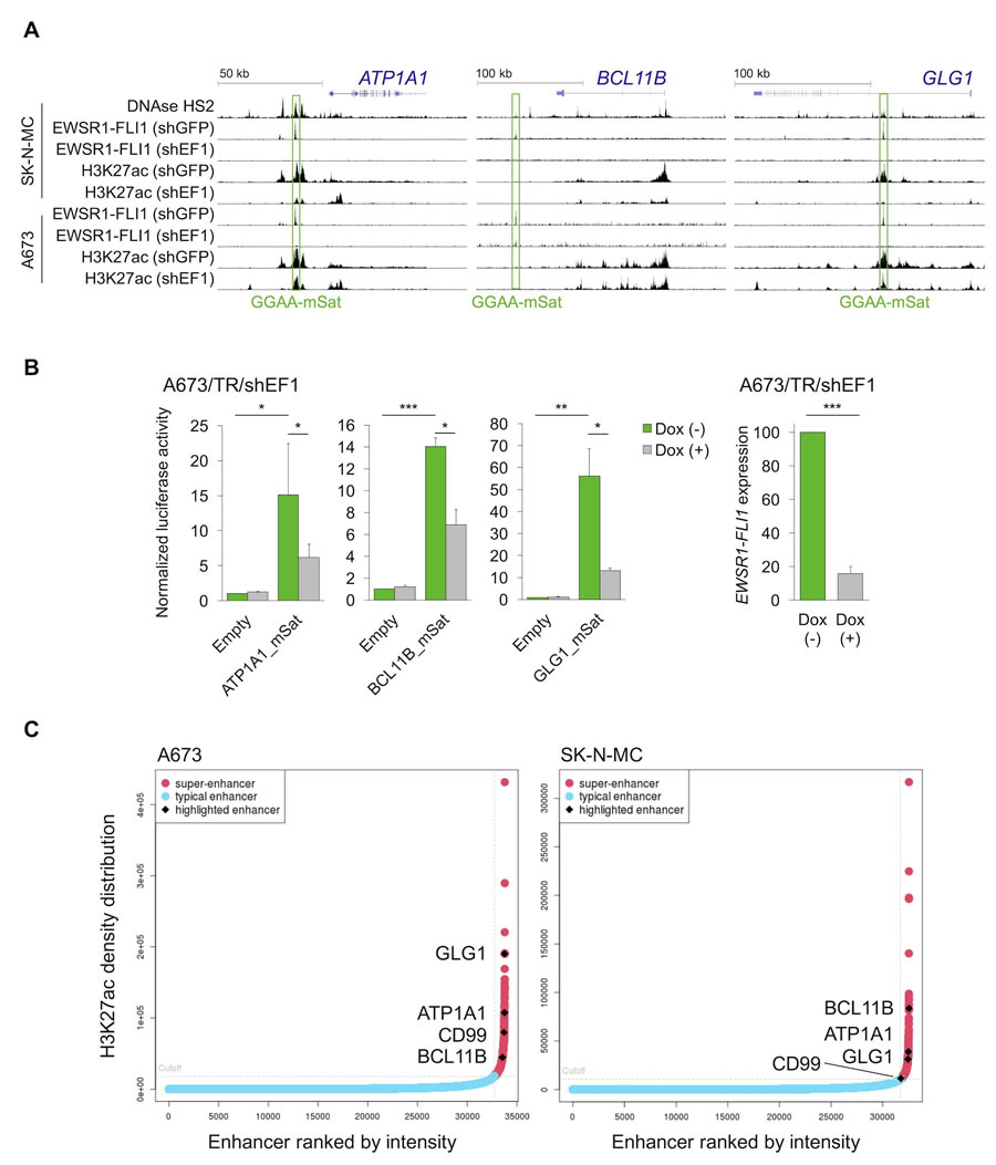 EWSR1-FLI1 binds to GGAA-microsatellites with enhancer activity located close to or within the