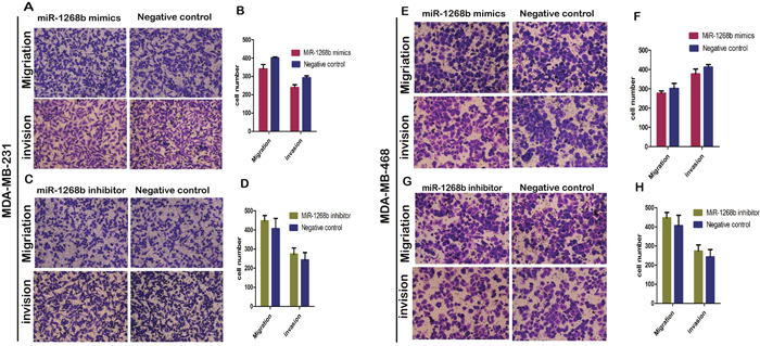 Transwell assay revealed that miR-1268b had no effect on migration or invasion ability of breast cancer.