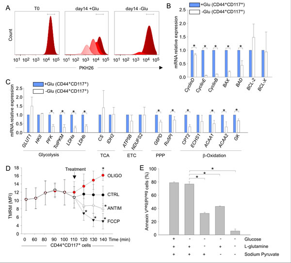 Glucose deprivation modulates the metabolic profile of ovarian cancer CD44