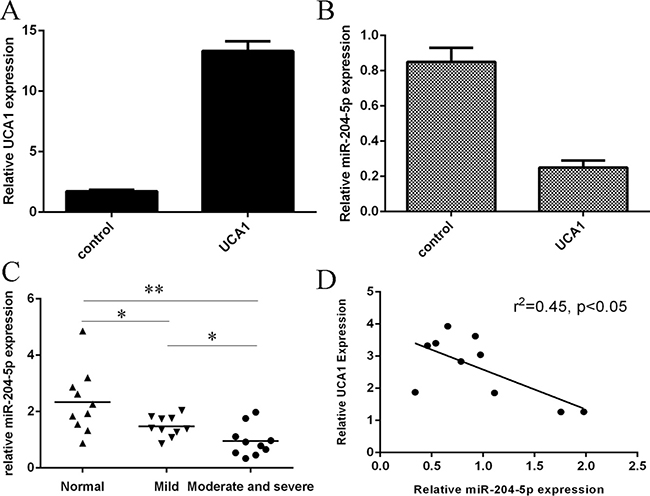 The expression of miR-204-5p was downregulated in the OA cartilage.