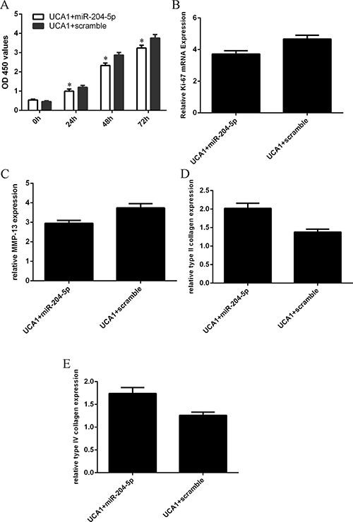 Elevated expression of UCA1 regulated the chondrocytes cell proliferation and collagen expression through inhibiting the miR-204-5p expression.