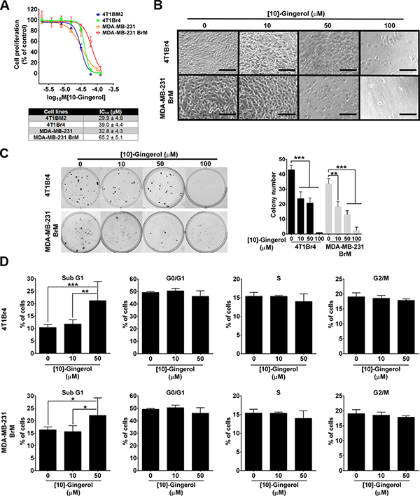 [10]-gingerol induces concentration-dependent cell death in mouse and human metastatic TNBC cells in vitro.