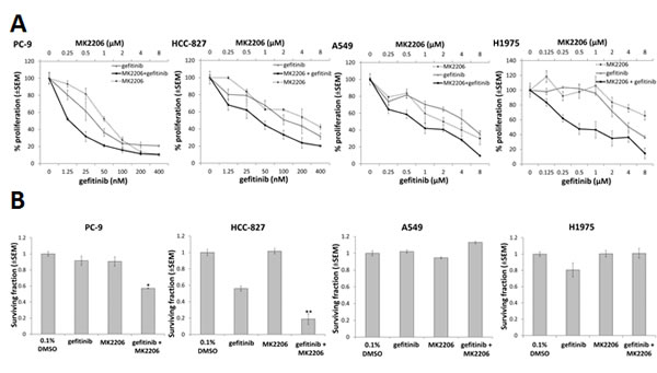 The effect of combining gefitinib and MK2206 on growth and clonogenic survival of NSCLC cells.