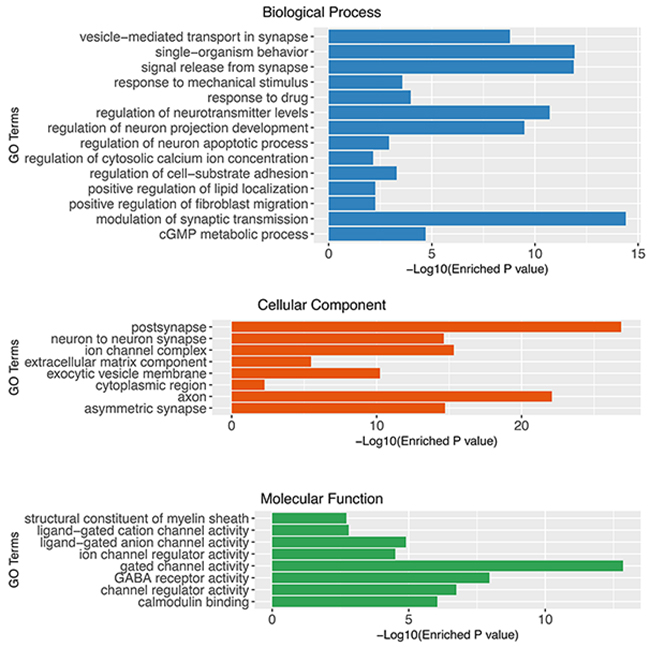 Gene set enrichment analysis of glioblastoma associated genes using Gene Ontology (Cellular Component, Biological Process and Molecular Function).