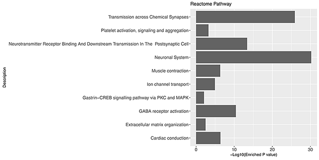 Gene set enrichment analysis of glioblastoma associated genes using Reactome Pathway database.