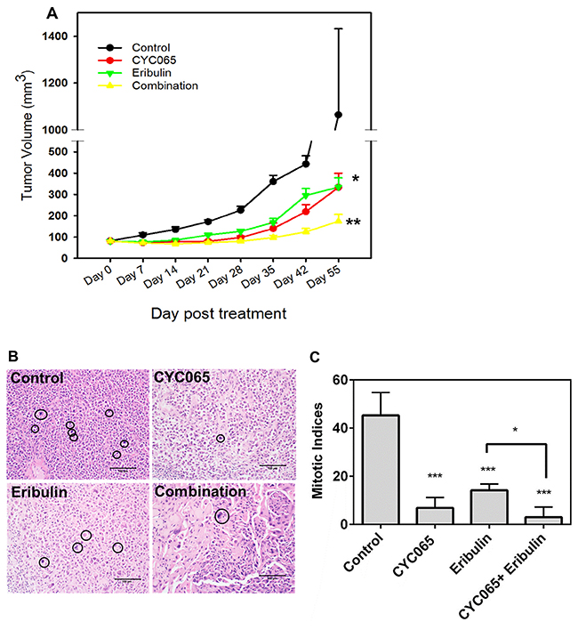 CYC065 and eribulin resulted in decreased tumor growth in a TNBC xenograft model of MDA-MB-231 cells.