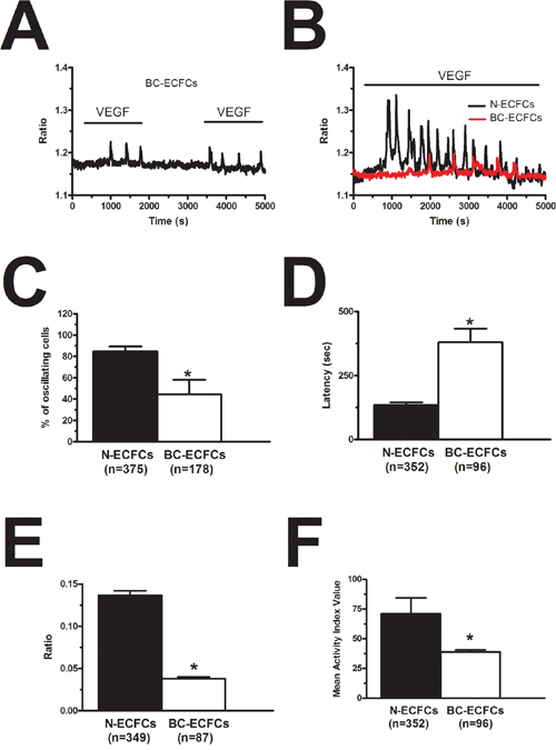 VEGF-induced intracellular Ca2+ oscillations are weaker in breast cancer-derived endothelial colony forming cells.