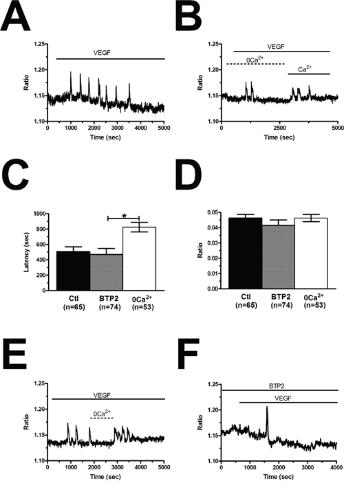 VEGF-induced intracellular Ca2+ oscillations are triggered by endogenous Ca2+ release and maintained by store-operated Ca2+ entry.