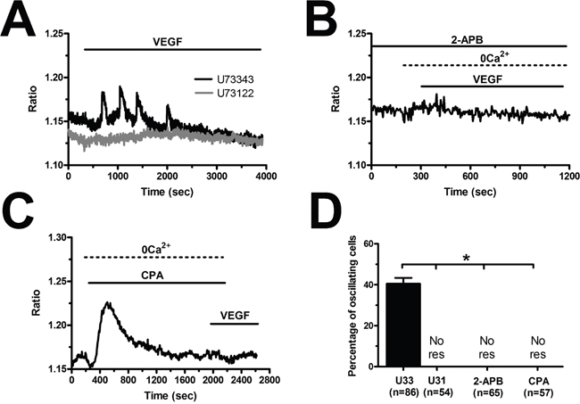 VEGF-induced intracellular Ca2+ oscillations are initiated by the PLCγ/InsP3 pathway in breast cancer-derived endothelial colony forming cells.