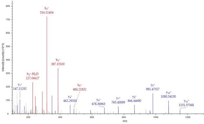 MS/MS spectrum of MH+1466.68767.