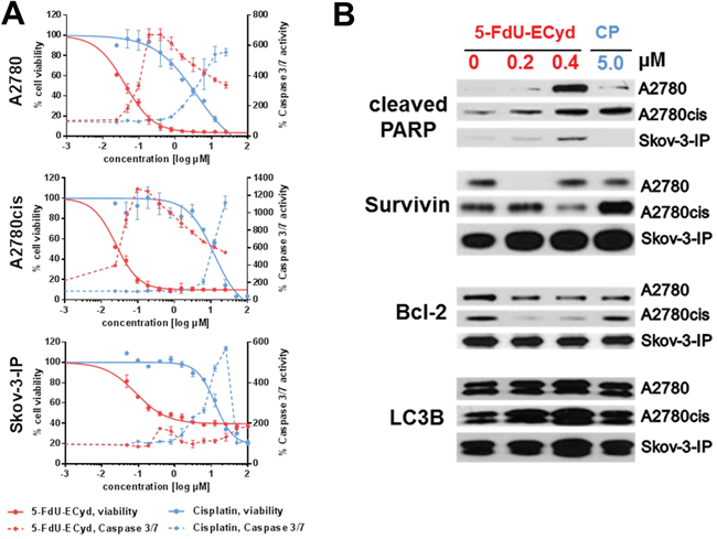 The activity of 5-FdU-ECyd in platinum-sensitive and platinum-resistant ovarian cancer cells.