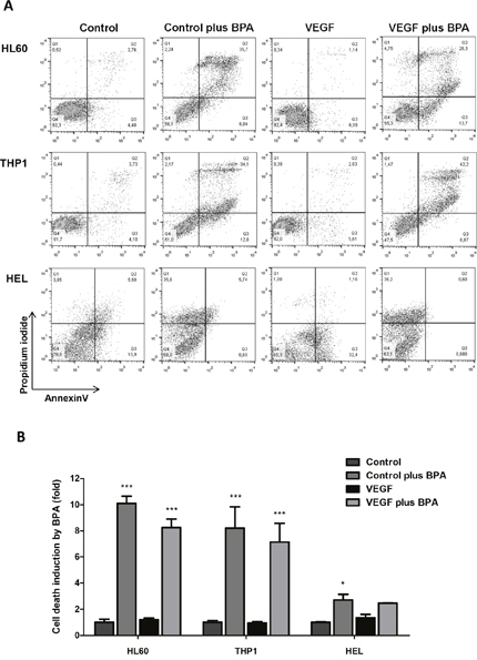The effect of bromopyruvic acid (BPA) in cell viability in AML cells with and without VEGF stimulus.