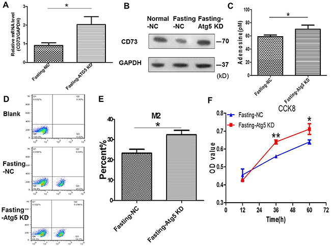 Knockdown of Atg5 in cancer cells enhances adenosine's effect on macrophages and tumor growth in coculture condition.