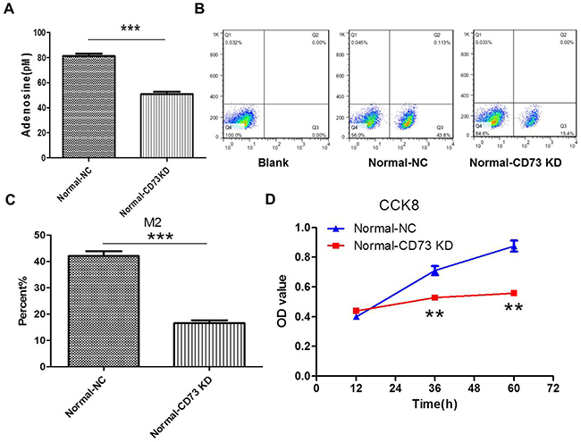 Knockdown of CD73 in cancer cells suppresses adenosine's effect on macrophages and tumor growth in coculture condition.