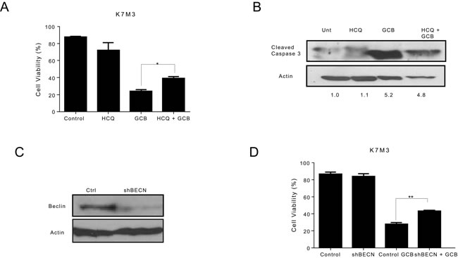 Inhibition of autophagy decreases the sensitivity of K7M3 osteosarcoma cells to gemcitabine (GCB)-induced cytotoxicity.