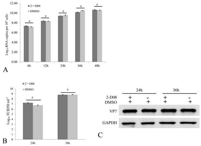 Active SUMOylation is not required for efficient GCRV replication.