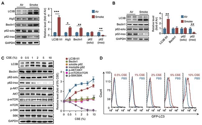 CS activates autophagy in neutrophils.