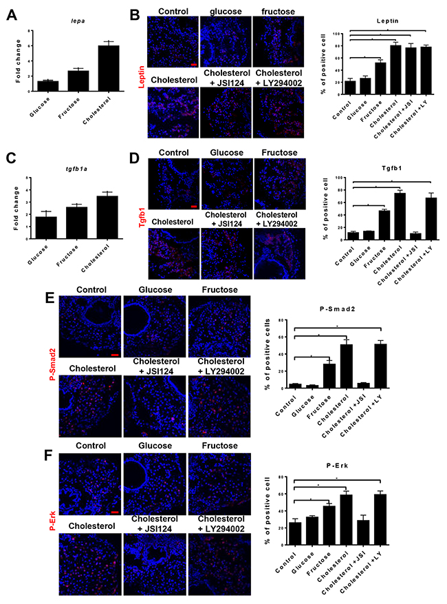 Oncotarget | Chronically high level of tgfb1a induction