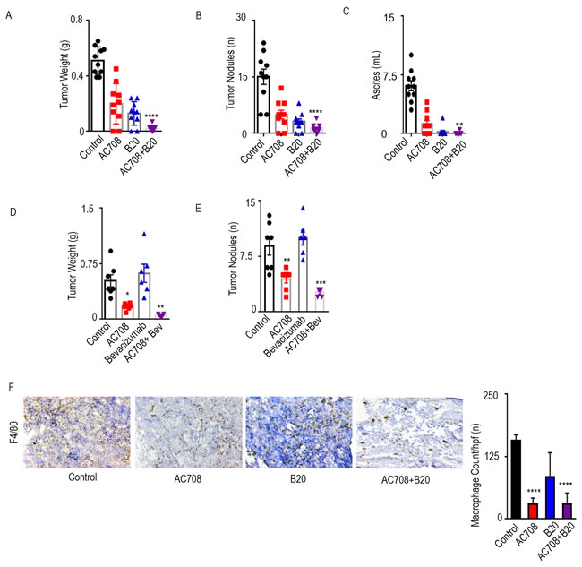 AC708 combined with B20 decreases tumor burden in syngeneic and PDX mouse models.