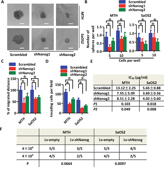 Knockdown of Nanog expression reduces the stem-like phenotype of OS cells.