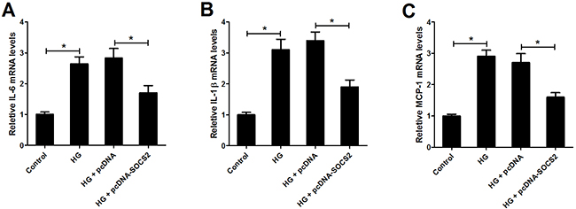 Effect of SOCS2 overexpression on the expression of IL-6, IL-1β and MCP-1 in HG-stimulated podocytes.