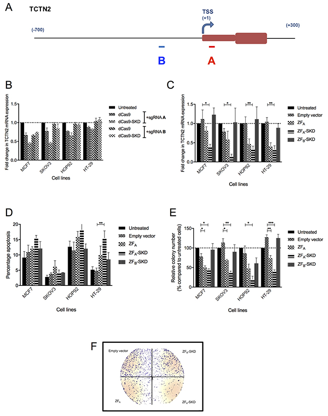 TCTN2 downregulation, by different platforms, alters growth phenotypes in four cell lines.