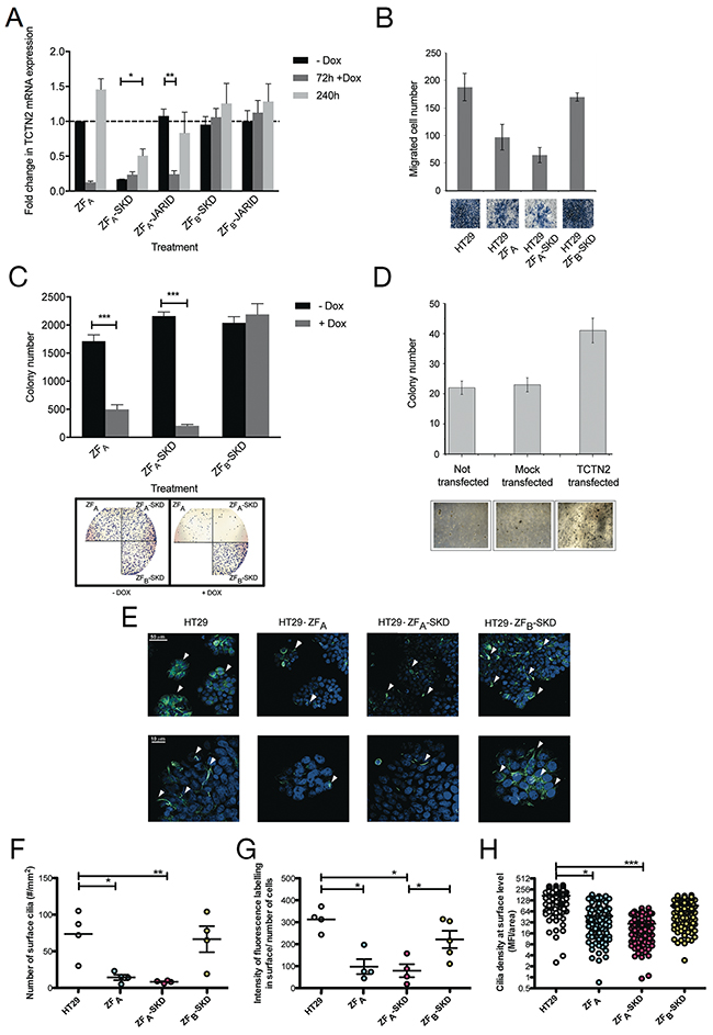 TCTN2 act as an oncogene: evidences collected by means of epigenetic editing and overexpression.