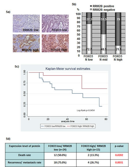 Coexpression of FOXO3 and RRM2B correlates with better disease survival in lung cancer patients.