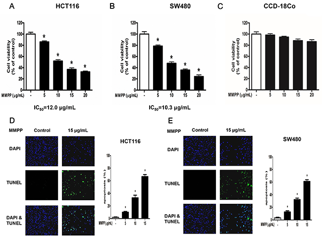 Effect of MMPP on the growth colon cancer cells and colon epithelial normal cells.