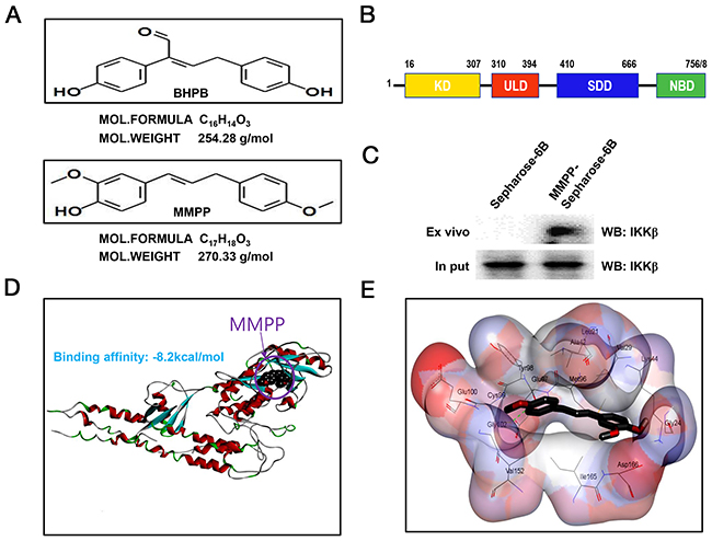 Structure of MMPP, and molecular binding between MMPP and IKKβ.