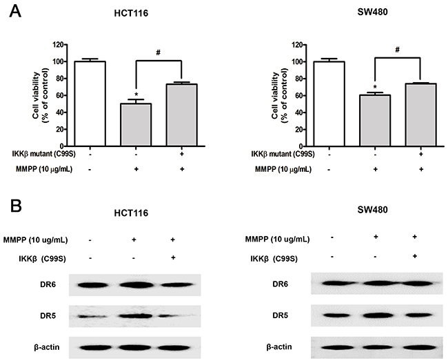 Effect of IKKβ mutant (C99S) on MMPP-induced inhibitory effect of cell growth, enhanced expression of DRs.