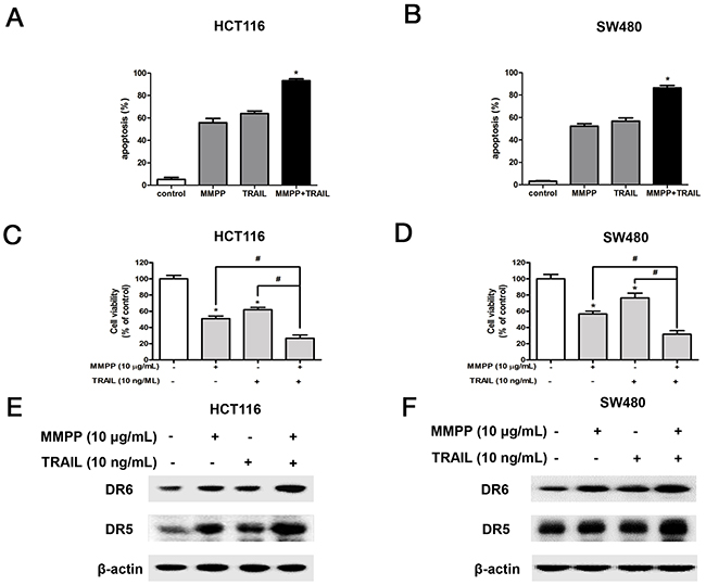 Effect of co-treatment with TRAIL and MMPP on apoptosis, cell growth and expression of DRs.