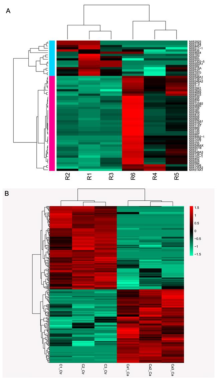 Heatmap of RNA sequencing data.