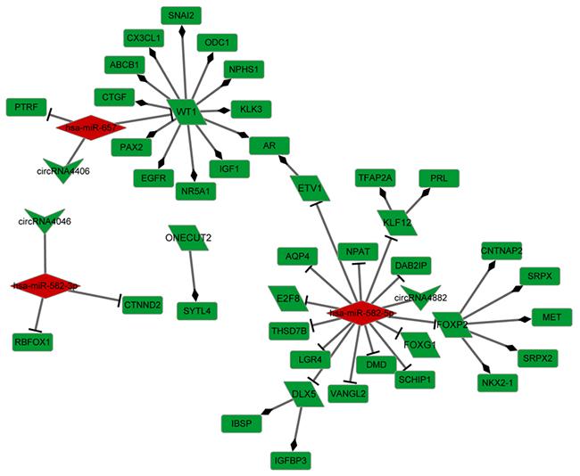 Transcriptional factor regulatory network.