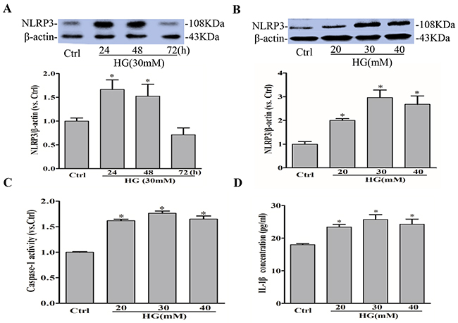 High glucose induces NLRP3 inflammasome activation in RAECs.