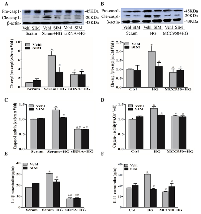 Simvastatin inhibited high glucose-induced caspase-1 activity and IL-1β release.