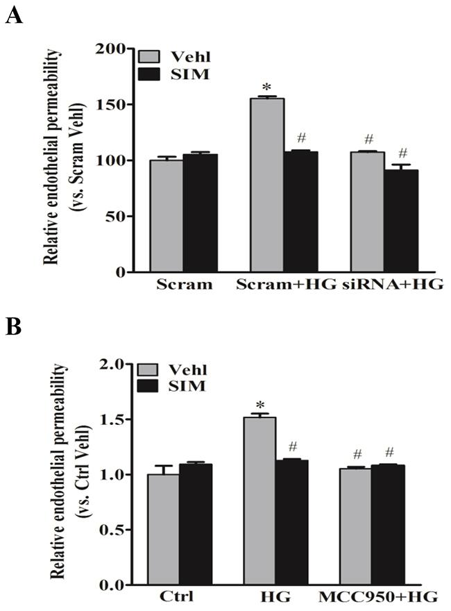 Simvastatin inhibited high glucose-induced endothelial hyperpermeability.