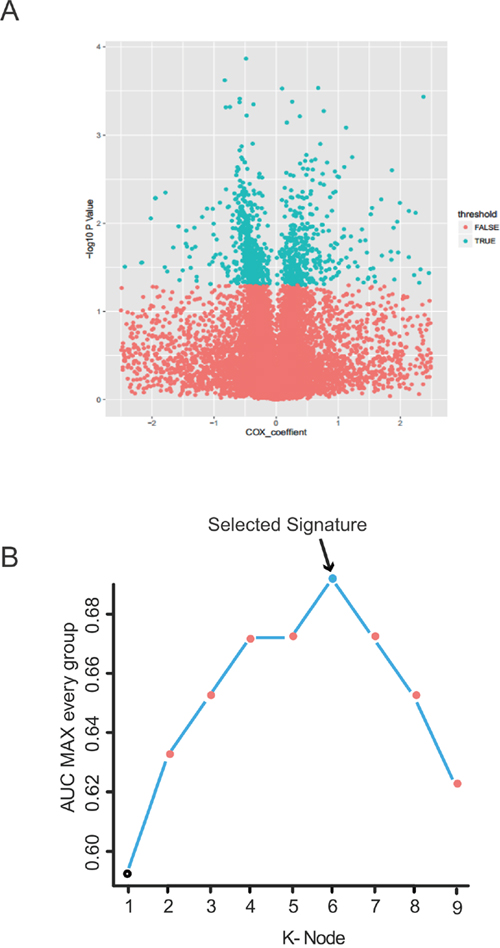 Identification of the PCGs-lncRNAs-microRNAs signature in the training dataset.