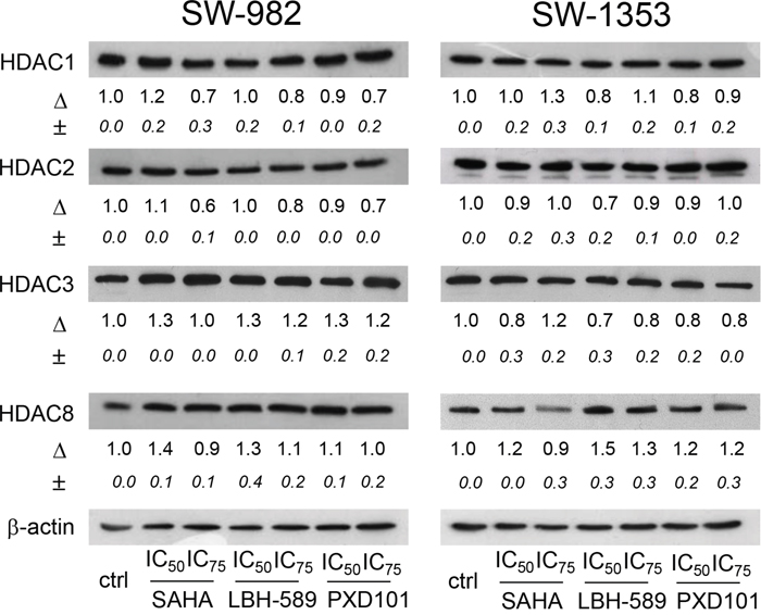 Expression of Class I HDACs in SW-982 and SW-1353 cells.