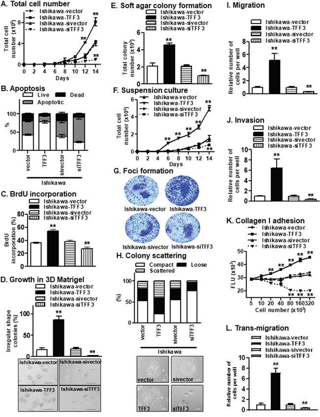 Forced expression of TFF3 in Ishikawa cells stimulates oncogenicity.