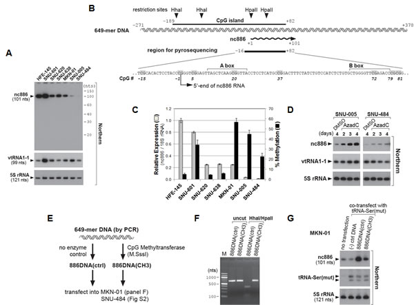 nc886 expression suppression in gastric cancer cell lines through CpG DNA methylation.