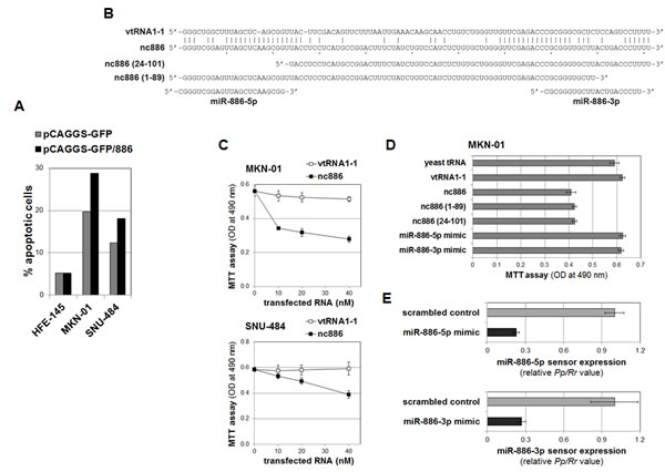 nc886 inhibition of cell proliferation independently of mature miRNAs.